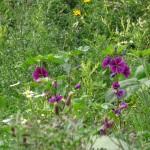 Blühstreifen  Bunter Naturschutz
